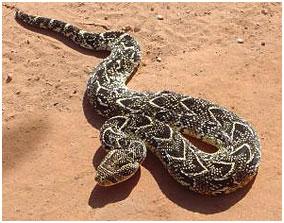 Südafrika Schlangen