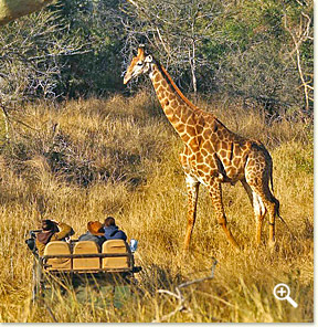 Thanda Game Reserve